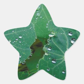 Refreshing Rain Drops Star Sticker