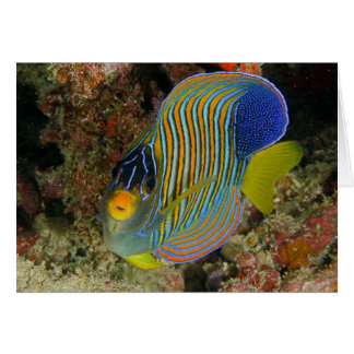 Regal angelfish greeting card