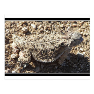 Regal Horned Lizard Postcard