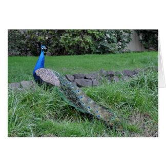 Regal Peacock Greeting Card