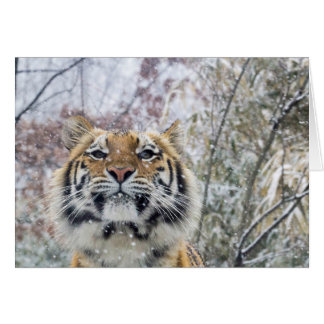 Regal Tiger in Snow Note Card
