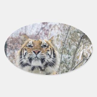 Regal Tiger in Snow Oval Sticker