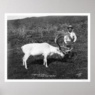 Reindeer & Eskimo Alaska 1920 Poster