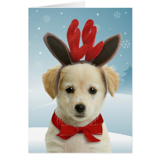 Reindeer Puppy Christmas Cards