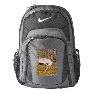 Reindeer walking in forest backpack