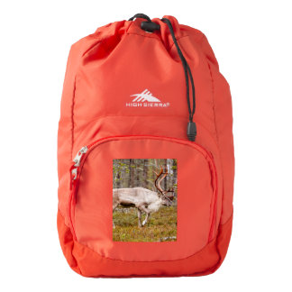 Reindeer walking in forest backpack