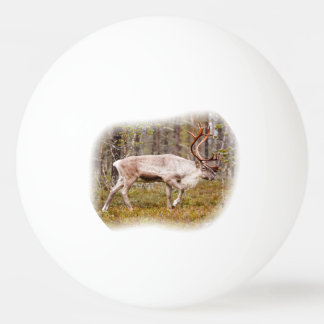 Reindeer walking in forest ping pong ball
