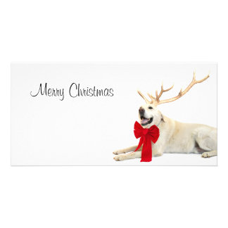 Reindeer yellow lab photo card template