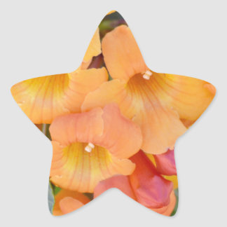 Rejoice Star Sticker