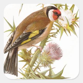 Relative Wild Birds Swaysland Goldfinch Square Sticker