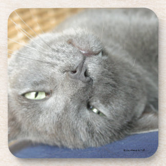 Relax! Grey Purring Cat Coaster