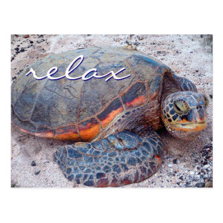 """""""Relax"""" quote Hawaii sea turtle close-up photo Postcard"""