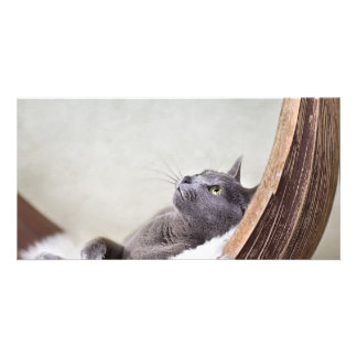 Relaxed Cat Picture Card