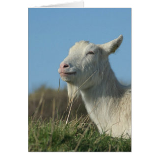 relaxed goat card