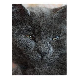 Relaxed Kitten Postcard