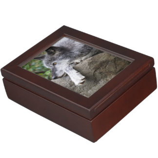 Relaxing Black Wolf Keepsake Box