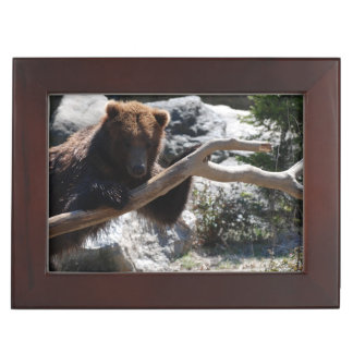 Relaxing Brown Bear Keepsake Box