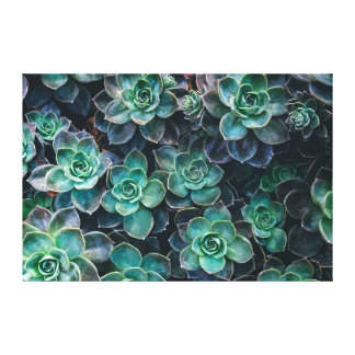 Relaxing Green Blue Succulent Cactus Plants Canvas Print