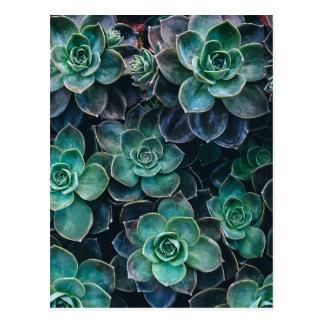 Relaxing Green Blue Succulent Cactus Plants Postcard