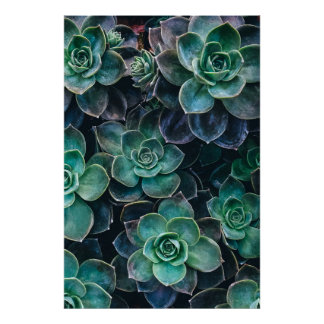 Relaxing Green Blue Succulent Cactus Plants Poster
