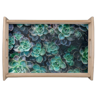 Relaxing Green Blue Succulent Cactus Plants Serving Tray