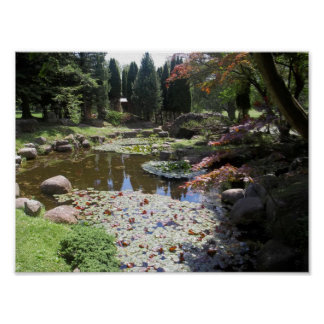 Relaxing Lily Pond Poster