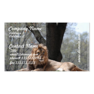 Relaxing Lion Pack Of Standard Business Cards