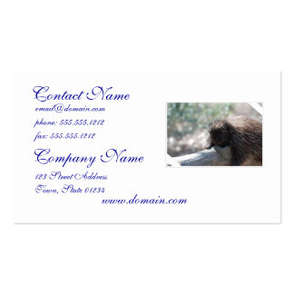 Relaxing Porcupine Pack Of Standard Business Cards