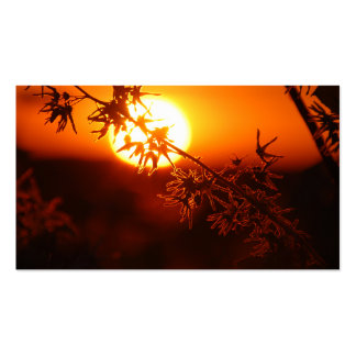 Relaxing Sunset Pack Of Standard Business Cards