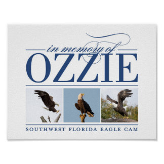Remembering Ozzie Decorative Poster