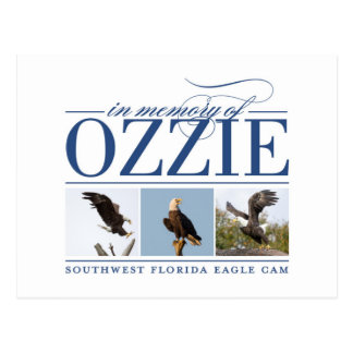 Remembering Ozzie Postcard