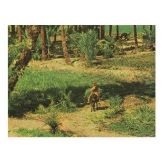 Replica  Vintage Egypt, Nile delta agriculture Postcard