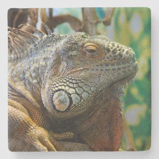Reptile Iguana Limestone Stone Coaster Reptilian