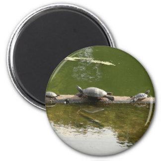 reptile merchandise 6 cm round magnet