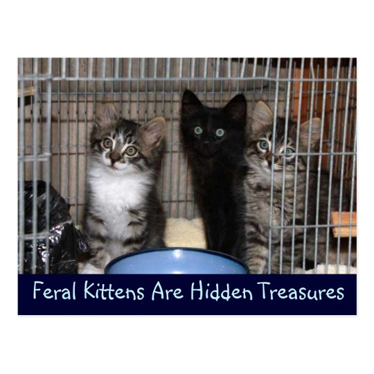 Rescued Kitten Treasures Postcard