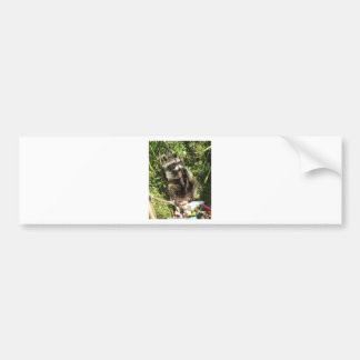 Rescued & Rehabilitated Raccoon Baby Bumper Sticker