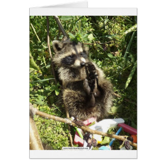 Rescued & Rehabilitated Raccoon Baby Greeting Card