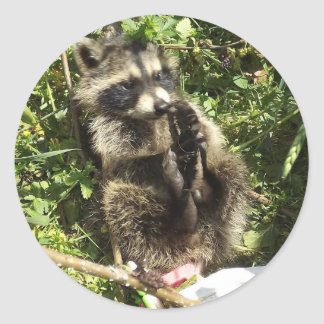 Rescued & Rehabilitated Raccoon Baby Round Sticker