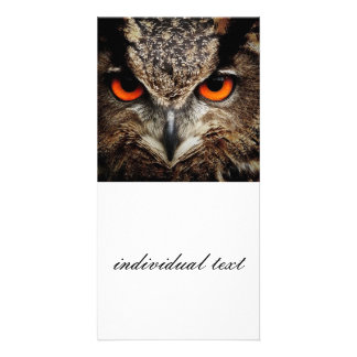 researchers looking owl photo greeting card