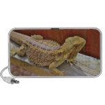 Resting Bearded Dragon 2 Notebook Speakers