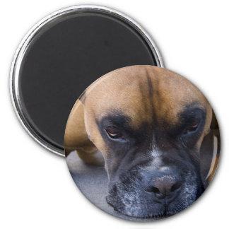 Resting Boxer Dog Magnet