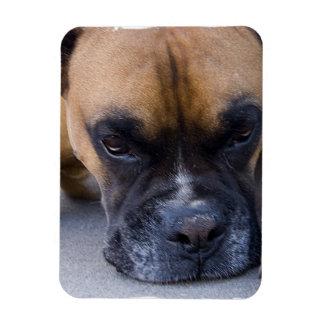 Resting Boxer Dog Premium Magnet Magnets