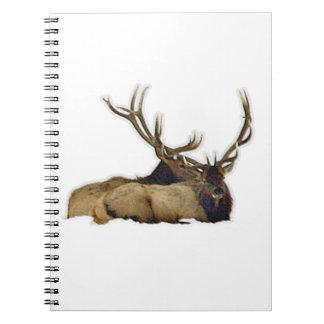 Resting bull elk notebooks