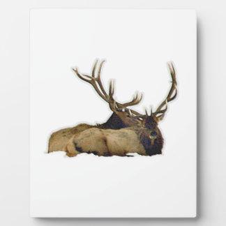 Resting bull elk plaque
