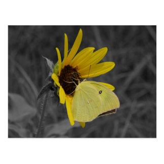 Resting Butterfly Postcard