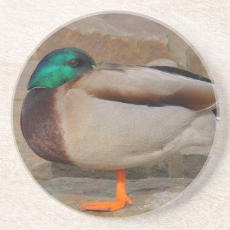 resting duck drink coaster
