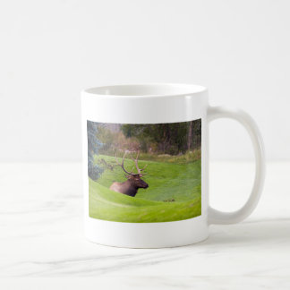 Resting Elk Basic White Mug