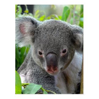 Resting, Happy Koala Postcard
