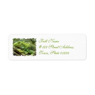 Resting Lizard Address Labels