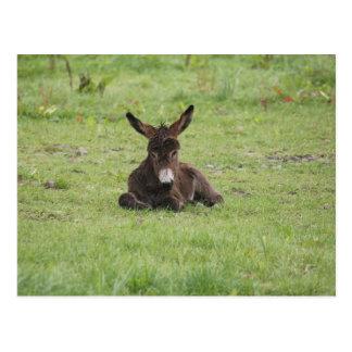 Resting on Grass Postcard